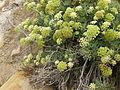 Plant.6305.JPG