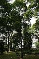 Plantes usuelles 01.jpg