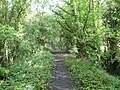 Pleasley Vale - Old Railway Track - geograph.org.uk - 569232.jpg