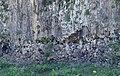 Pocheon Auraji Baegae Yongam 180519002.jpg