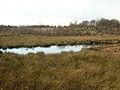Pond And New Tree Planting Near Toft Farm - geograph.org.uk - 284370.jpg