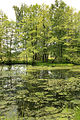 Pond by Lukoviště.jpg