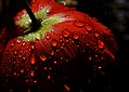 Poppy in the dew. (10622275814).jpg