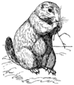Prairie dog (PSF).png