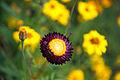 Prins Eugens Flower (15296647064).jpg