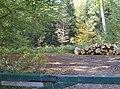 Private woodland - geograph.org.uk - 590507.jpg