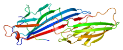 Protein AP2M1 PDB 1bw8.png