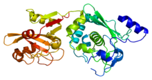 Protein CAPN9 PDB 1ziv.png