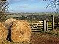 Public Bridleway - geograph.org.uk - 677483.jpg