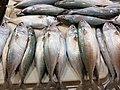 Rastrelliger faughni (Island Mackerel) in Mindanao, Philippines.jpg