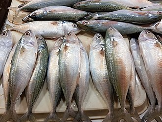 Island mackerel - Island mackerel in a fish market in the Philippines