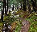 Red Mill Trail (5152839154).jpg