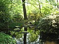 Reflection of a tree in the water at ouwehands dierenpark - panoramio.jpg