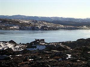 Rentiere am Berg Vesle Jukleeggji in Hemsedal