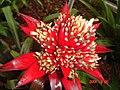 Resplendent red flower - panoramio.jpg