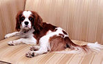 Reagan family pet spaniel, Rex