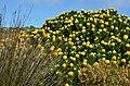 Rezervace Mys dobré naděje - Reserve Cape Of Good Hope, Jižní Afrika - panoramio.jpg