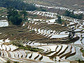 Rice paddy in Yuanyang, China.jpeg