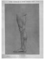 Richer - Anatomie artistique, 2 p. 103.png