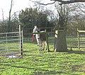 Ridgeway - geograph.org.uk - 10913.jpg