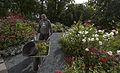 Ringve botaniske hage foto-åge hojem NTNU Vitenskapsmuseet DSC2786 (15100597237).jpg