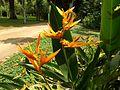 Rio de Janeiro Botanical Garden (003).jpg