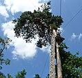 Risiko-Baum im Kletterwald - panoramio.jpg