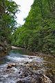 River Mali Rzav and Visocka Banja Spa in Serbia - 4283.NEF 09.jpg