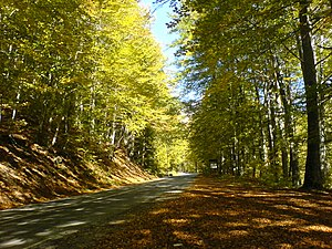 Road in Rila mountain-autumn 2007.JPG