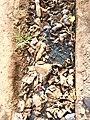 Road sewage Conakry.jpg