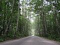 Road to paradise (2761342779).jpg