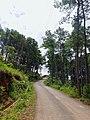 Roads Shillong.jpg
