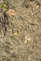 Rocks in sand.jpg