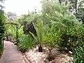 Rodef Shalom Biblical Botanical Garden - IMG 1355.JPG