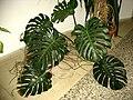 Rostlina na chodbě.jpg