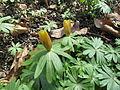 Rostliny 4772.jpg