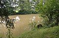 Ruine Altentannn - moat 01.jpg