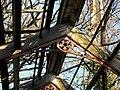 Ruined glasshouse (detail) - geograph.org.uk - 1602885.jpg