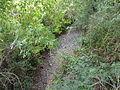 Ruisseau Borderie à sec, Mansac entre D147 et Chalmont amont.JPG