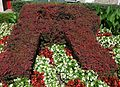 Rutgers R in flowers at College Avenue New Brunswick campus.JPG