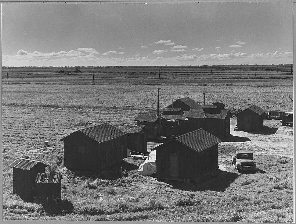 Ryer Island, Sacramento County, California. Company camp for crew of Filipino asparagus field worker . . . - NARA - 521703