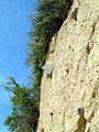 SE Rügen Kliff 6.jpg