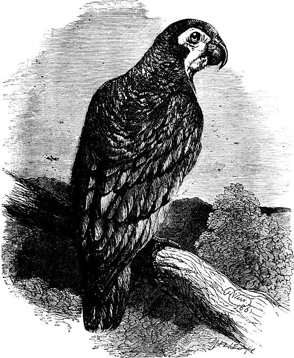 falconhurst swiss family robinson