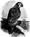 SFR b+w - green parrot.jpg