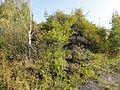 Saint-Saulve - Terril n° 181, Cendres sur 180 (06).JPG