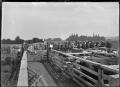 Saleyards at Maungakaramea, 1923 ATLIB 300275.png