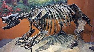 Paramylodon - Skeleton in San Diego