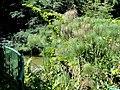 San Juan Botanical Garden - DSC07005.JPG