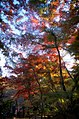 Sankeien - panoramio.jpg