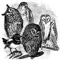 Sarah Stickney Ellis's tame birds.jpg